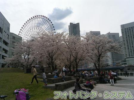 カップヌードルミュージアムパークの桜