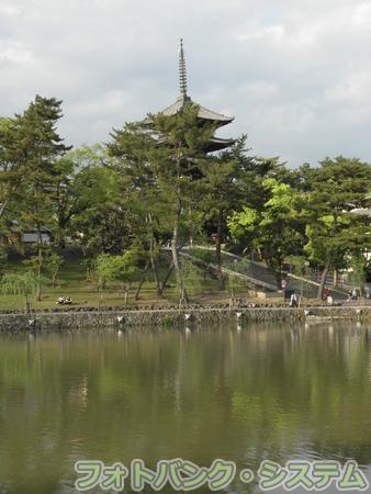 猿沢池から見た興福寺五重塔