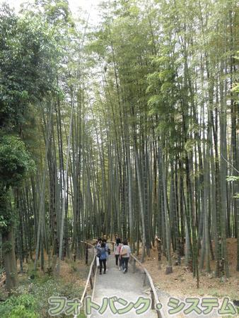 高台寺:竹林