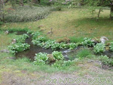 日光田母沢御用邸:庭園②